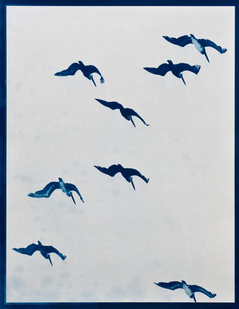 blue image of pelicans flying overhead