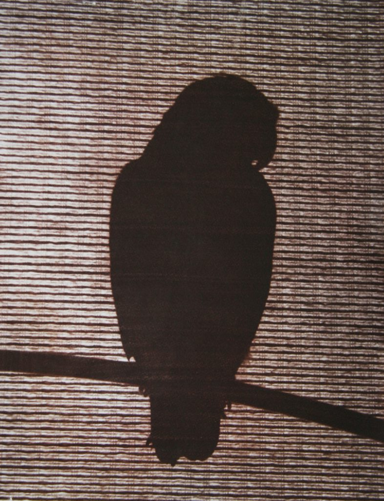 silhouette of parrot
