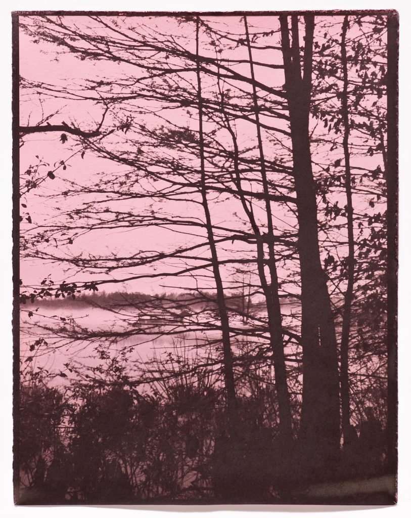 brown on pink image of trees & water's edge