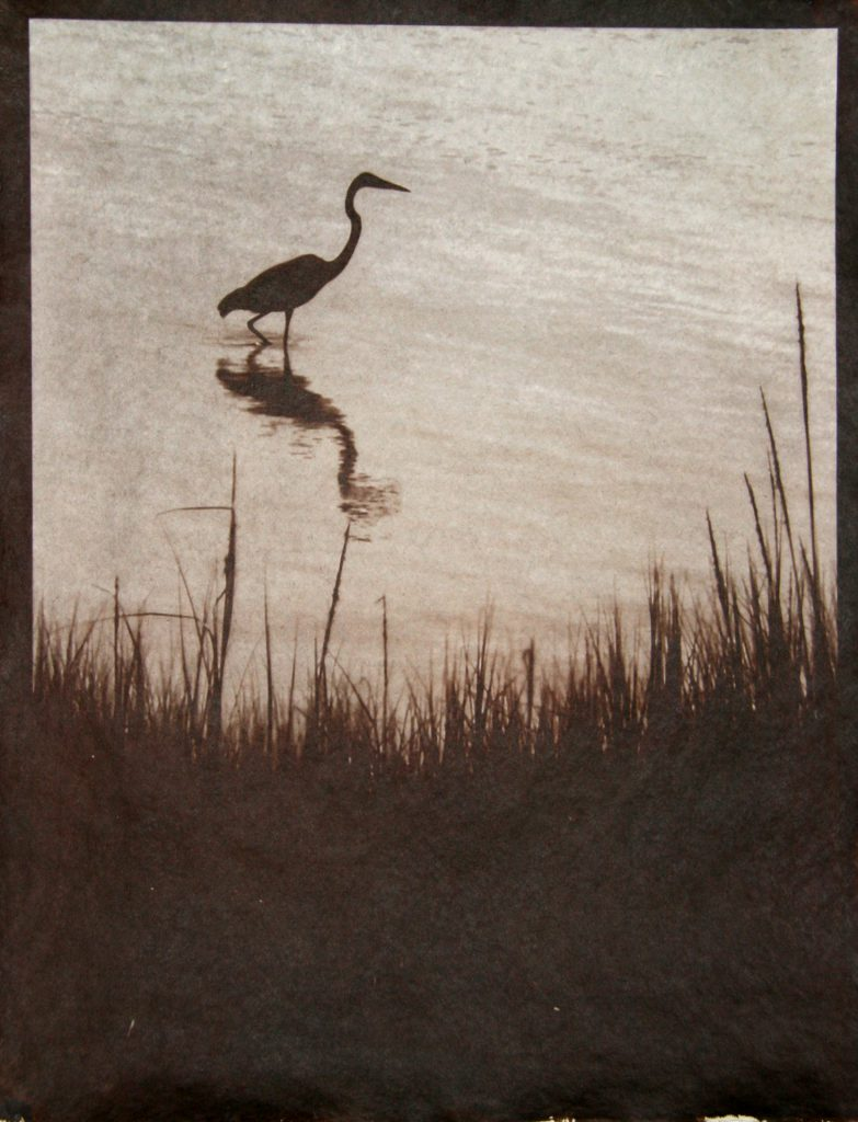 heron, water, silhouette, brown image