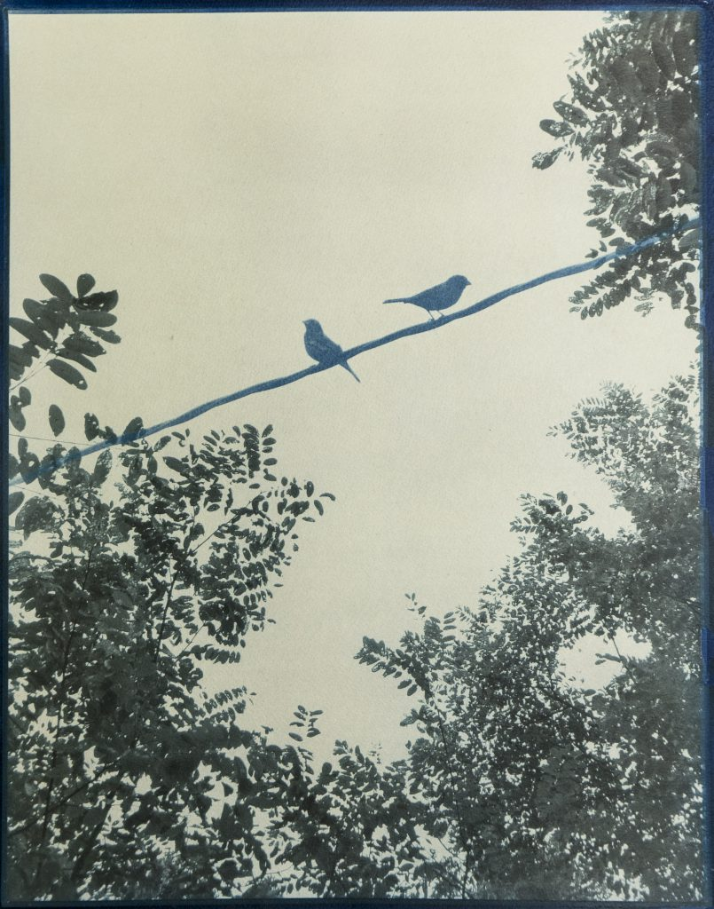 brown & blue image of birds on wire surrounded by small leafed trees