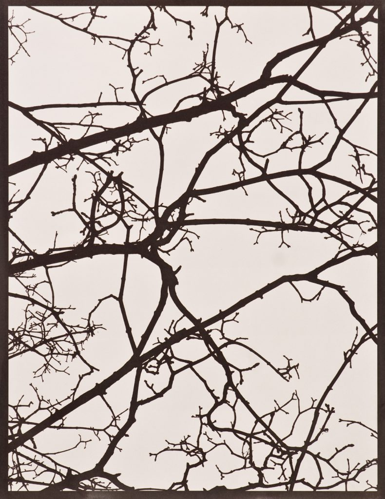 brown silhouette of branches