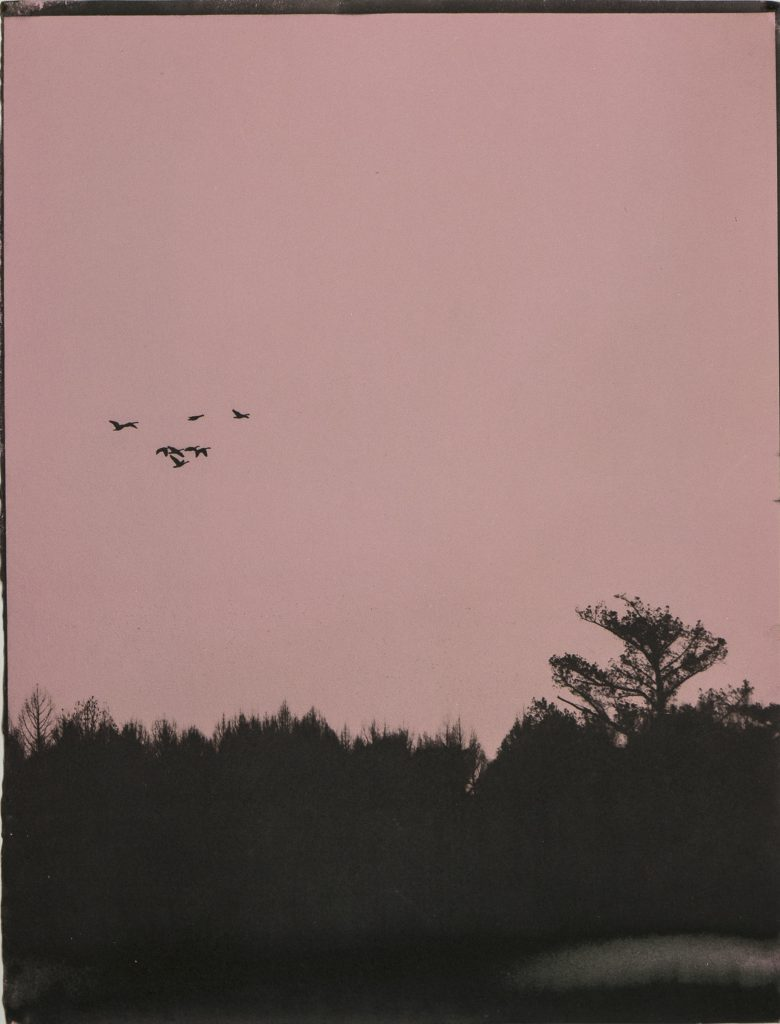 brown on pink, birds, sky, trees