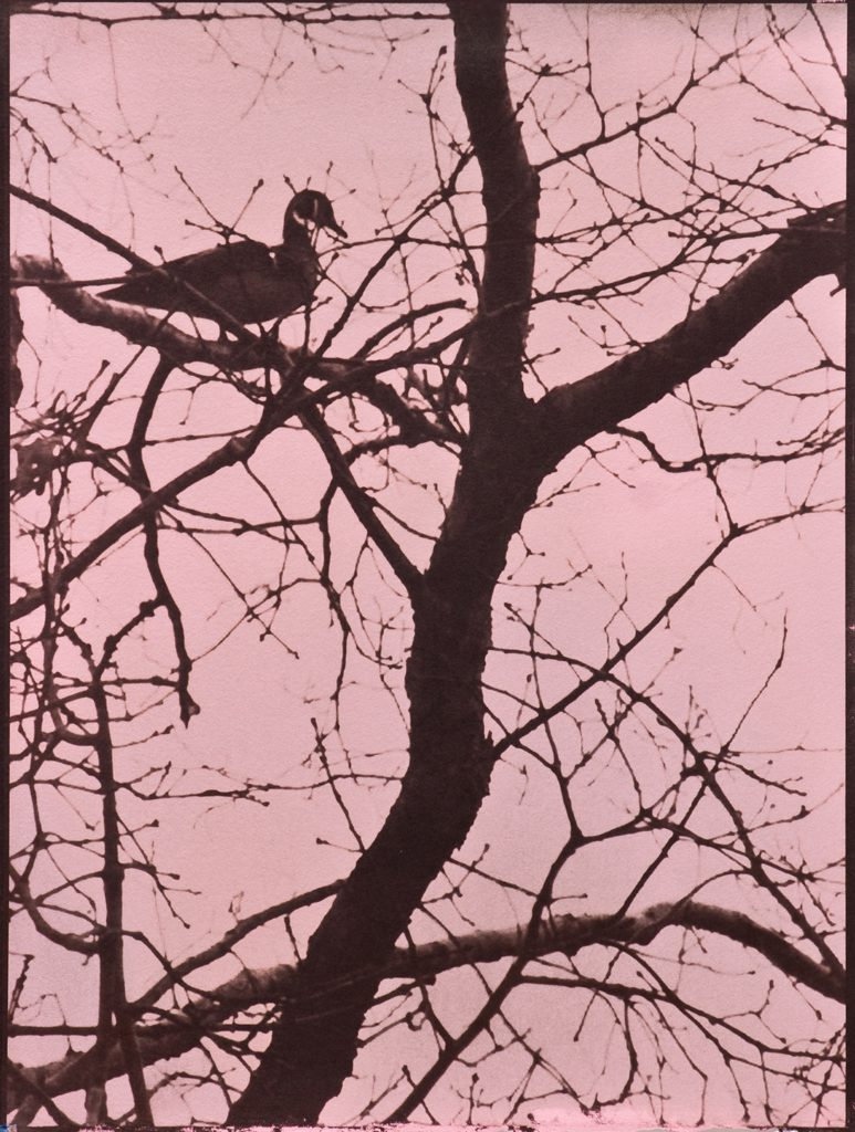 pink & brown picture of wood duck in tree