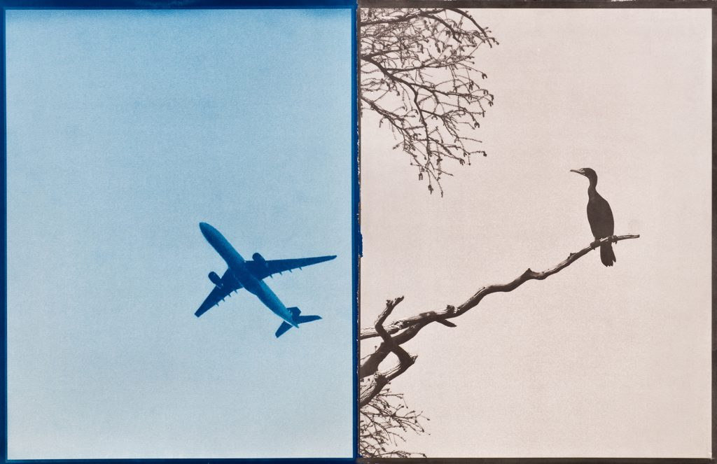 blue picture of airplane & brown picture of cormorant on branch