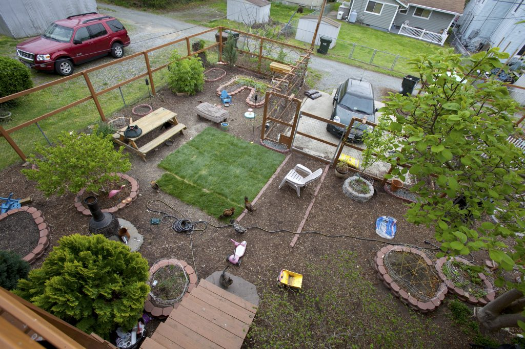 yard photographed from above, with chickens & cats