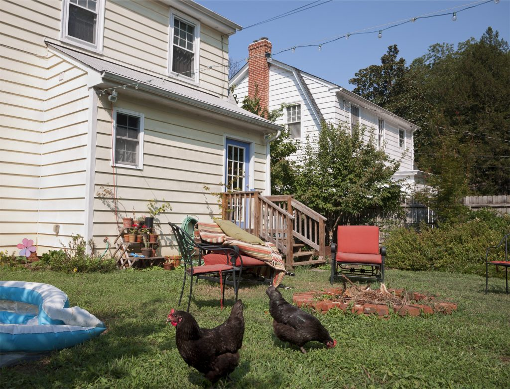 chickens in backyard with rear of houses