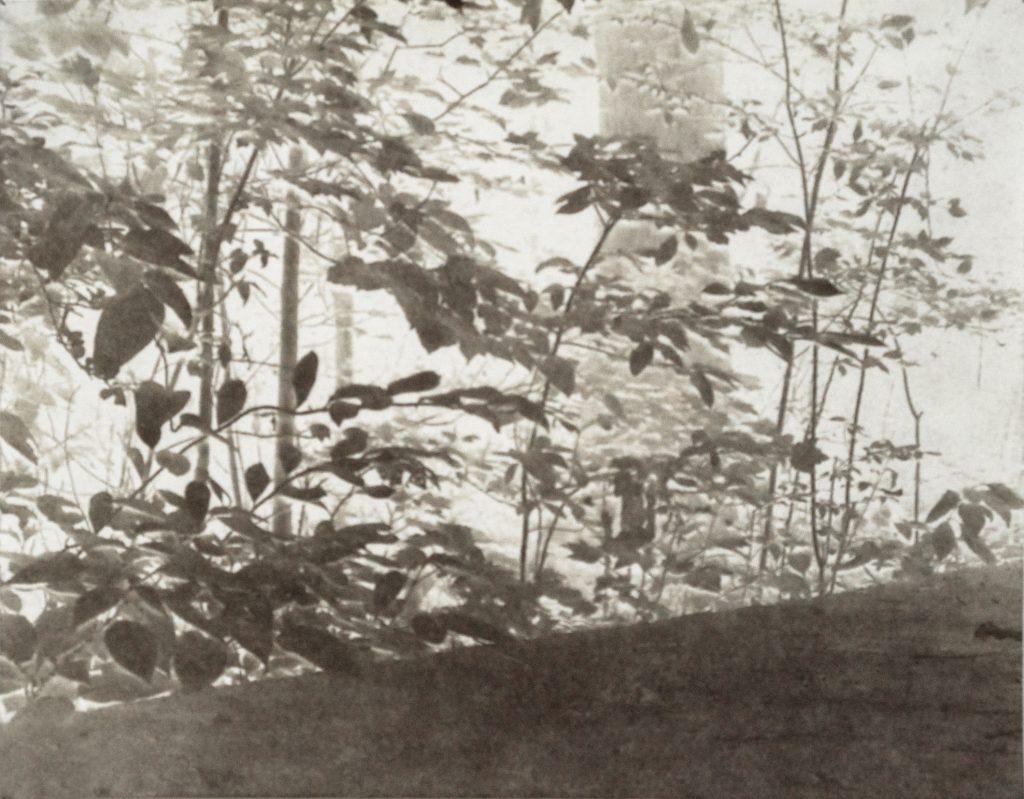 trees, shrubbery