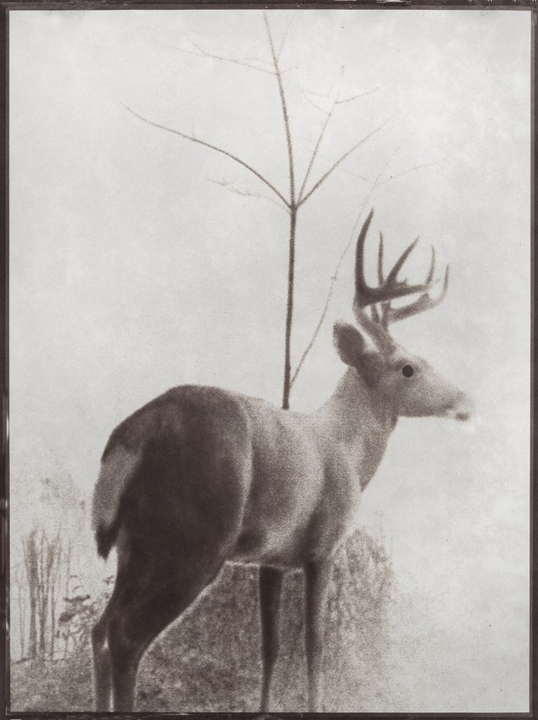 deer tree