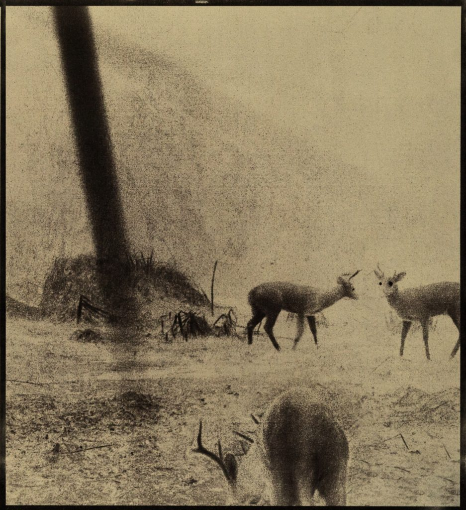 3 deer in landscape
