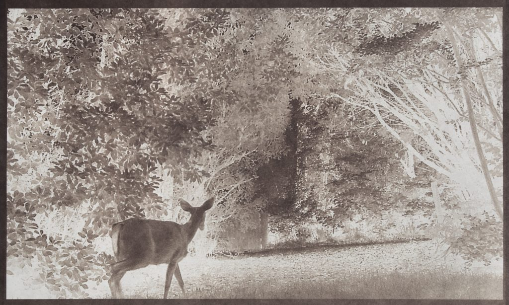 deer in night landscape