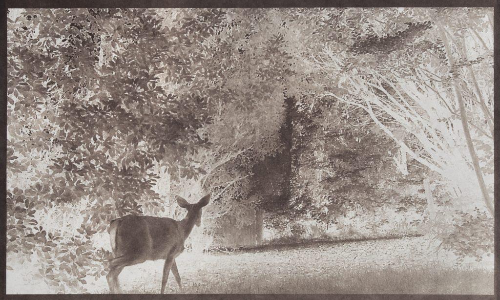 deer in night landscape